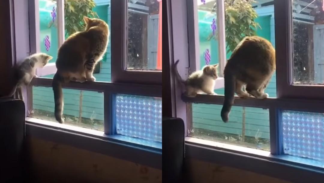 Gatos-parados-sobre-una-ventana