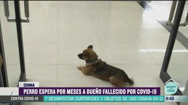 perro espera por meses a dueno fallecido por covid 19 en china