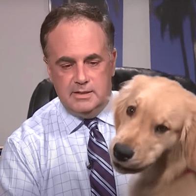Perrito interrumpe a su dueño durante transmisión en vivo