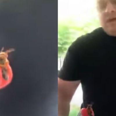 Video del supuesto avispón gigante asiático en Monterrey crea polémica en redes sociales