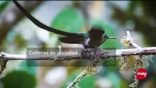 FOTO: 6 de junio 2020, crean jardin de colibries en cdmx