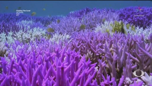 Estudio revela secreto de los corales fluorescentes