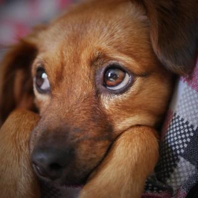 ¿Por qué se conmemora hoy el Día Mundial del Perro Callejero?
