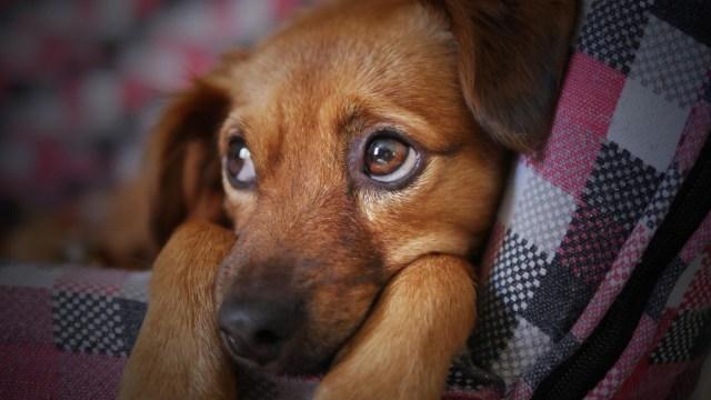 perro cafe mirando costado