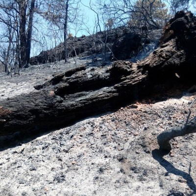 Joven recibiría multa millonaria por provocar incendio en Tepoztlán durante video de TikTok