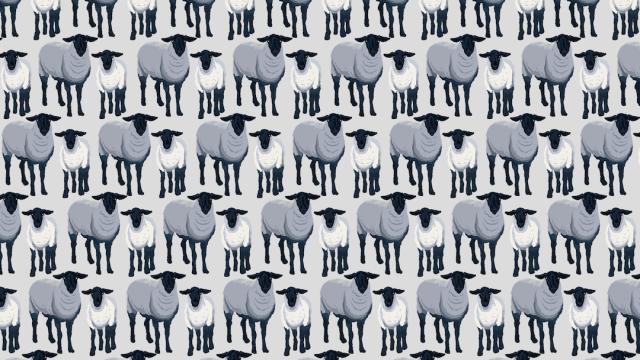 Reto viral, encuentra los lobos disfrazados de oveja, ilustración