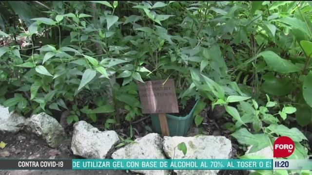 mexico ocupa el segundo lugar en plantas medicinales