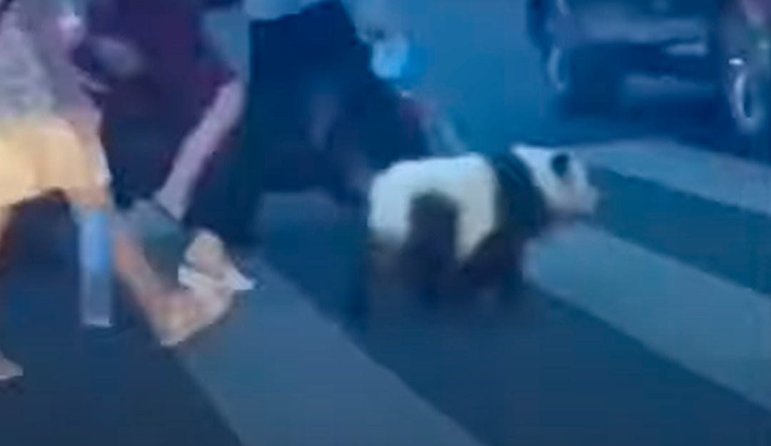 Mujer Oso Panda China Perro