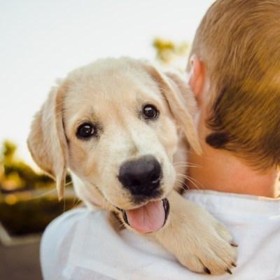 Dos perros cuidaron a un niño autista extraviado