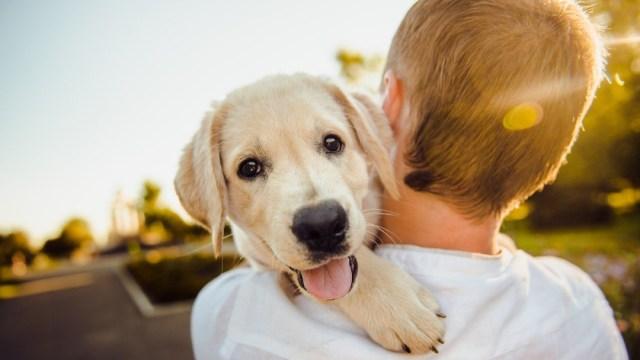 perro blanco niño playera blanca