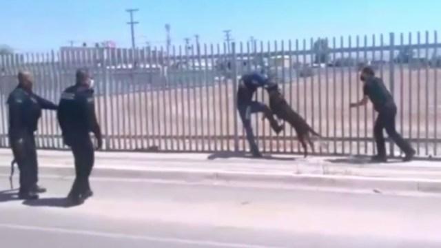 Perro policía evita suicidio de un migrante en Mexicali, Baja California
