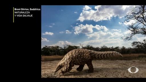 Sony y Organización Mundial de Fotografía anuncian a los ganadores de concurso
