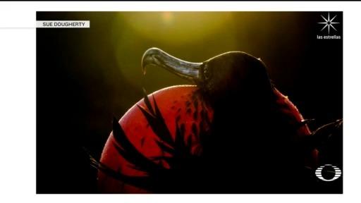 ganadores del concurso de fotografía de aves de Audubon 2020