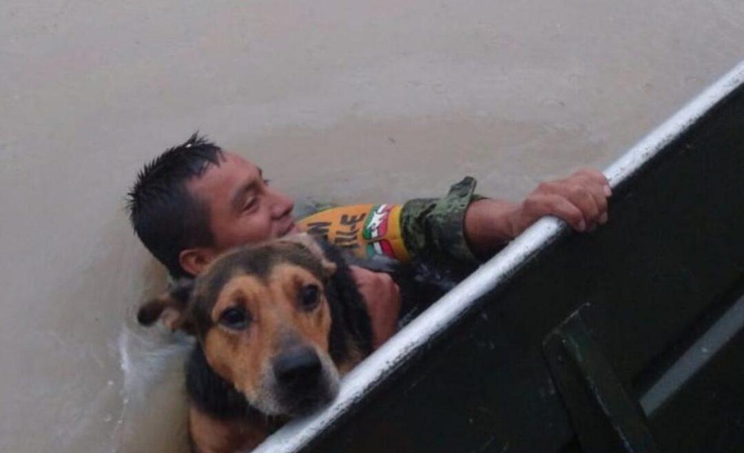 Soldado rescató a un perro de inundación en Tamaulipas: foto