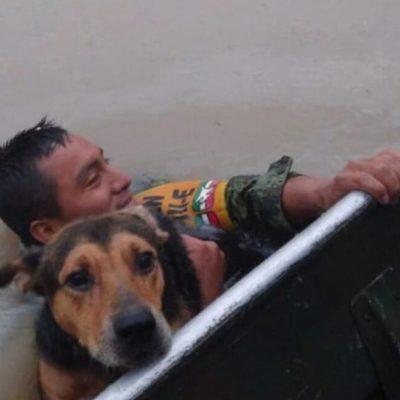 Soldado rescató a un perro de inundación en Tamaulipas y su foto se volvió viral