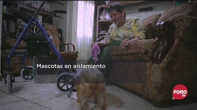FOTO: 11 de julio 2020, cual es la porcion adecuada de croquetas que debe comer un perro
