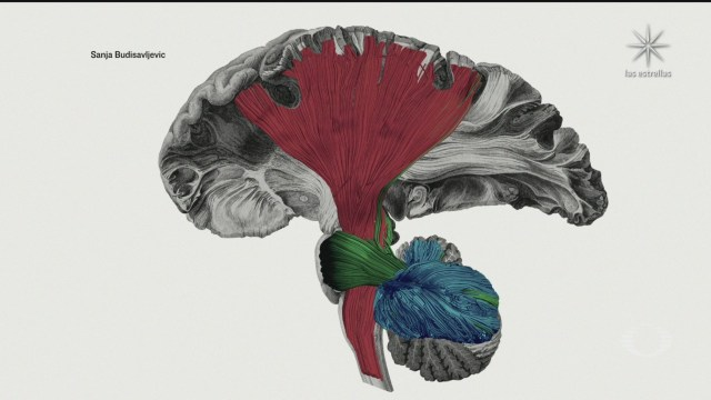 ganadores del decimo concurso anual de arte de neurociencia