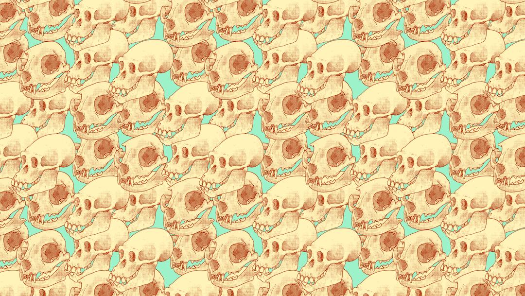 Encuentra los 4 cráneos humanos, ilustración