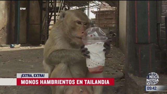 extra extra monos hambrientos en tailandia