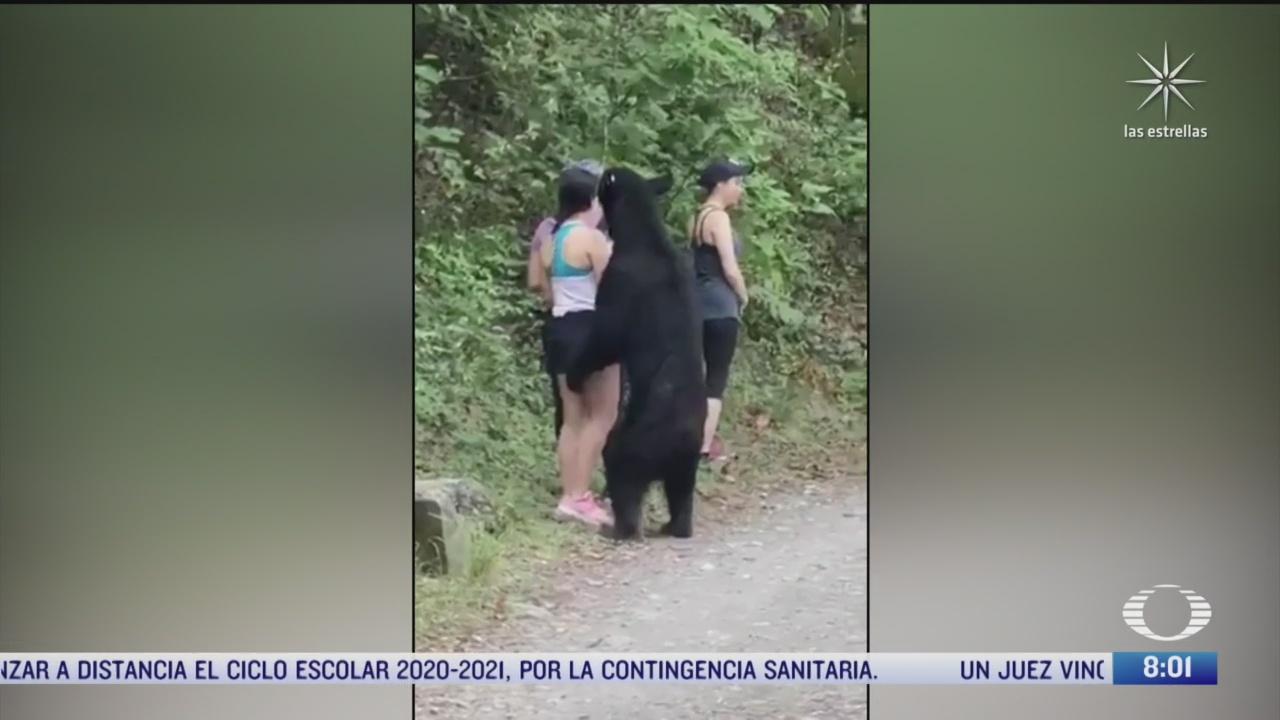 incrementa avistamiento de osos en area metropolitana de monterrey nuevo leon