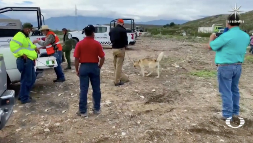 Lobo entrenado se suma a la búsqueda de la niña Lluvia en Ramos Arizpe, Coahuila