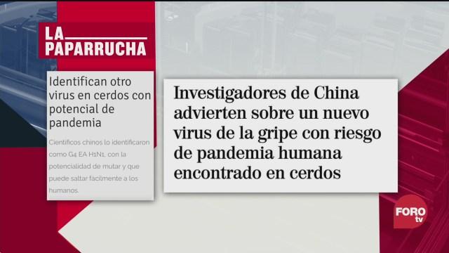 Nueva cepa de gripe porcina, la paparrucha del día