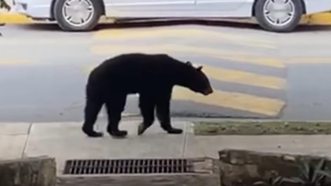 oso, Monterrey, captura de pantalla