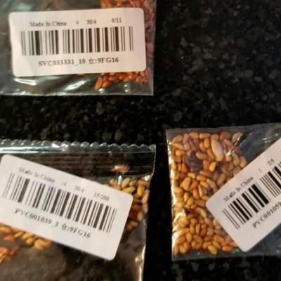 Hombre plantó las misteriosas semillas que llegan de China; esto es lo que sucedió