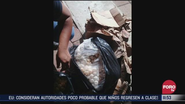 FOTO: 18 de julio 2020, recuperan 3 mil huevos de tortuga destinados al comercio ilegal en chiapas