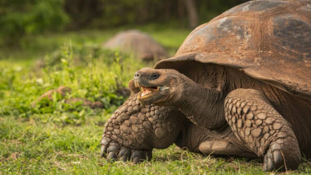 Islas Galápagos celebran 61 años como la primera área protegida de Ecuador