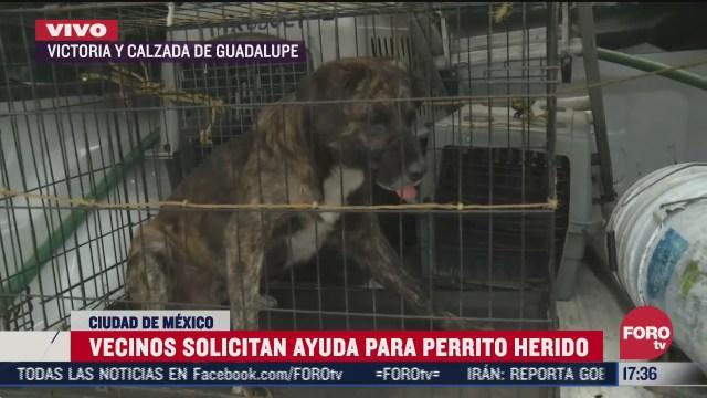 vecinos de cdmx piden ayuda para perrito lastimado