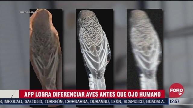 aplicacion logra diferenciar aves antes que ojo humano