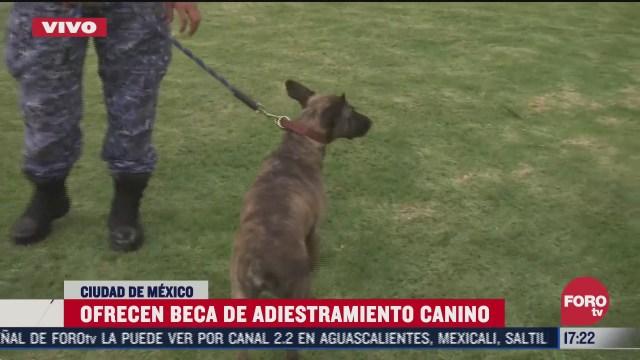 asi puedes adoptar y solicitar una beca de adiestramiento canino