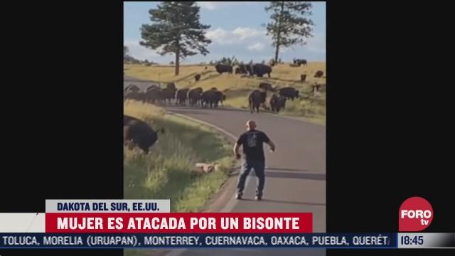 bisonte ataca a mujer que intento tomarse una selfie