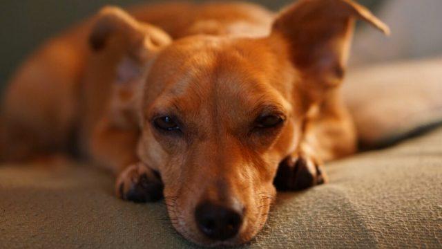 ¿Los perros pueden sentir celos? Experto de la UNAM explica