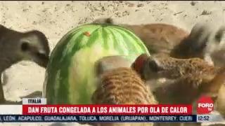 dan fruta congelada a los animales por ola de calor en italia