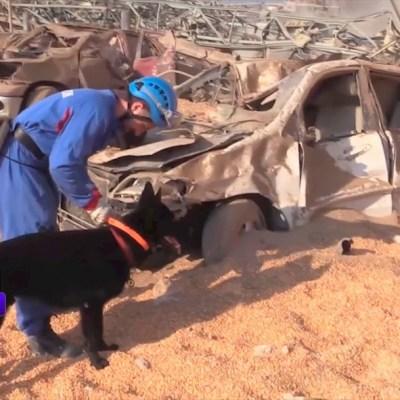 Un perro participa en la búsqueda de cuerpos y sobrevivientes entre las ruinas de las explosiones en Beirut