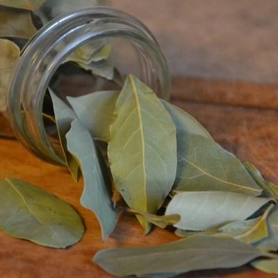 Conoce los beneficios a la salud del té de hoja de laurel