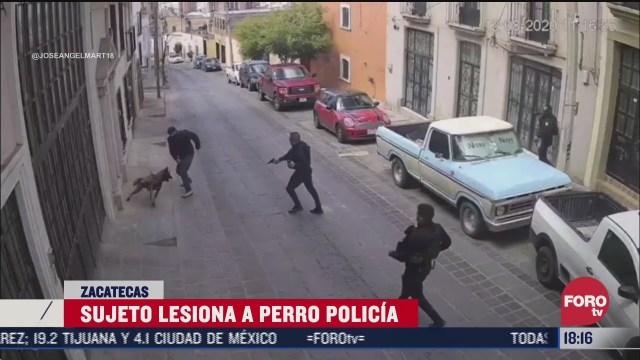 hombre lesiona con un cuchillo a perro policia
