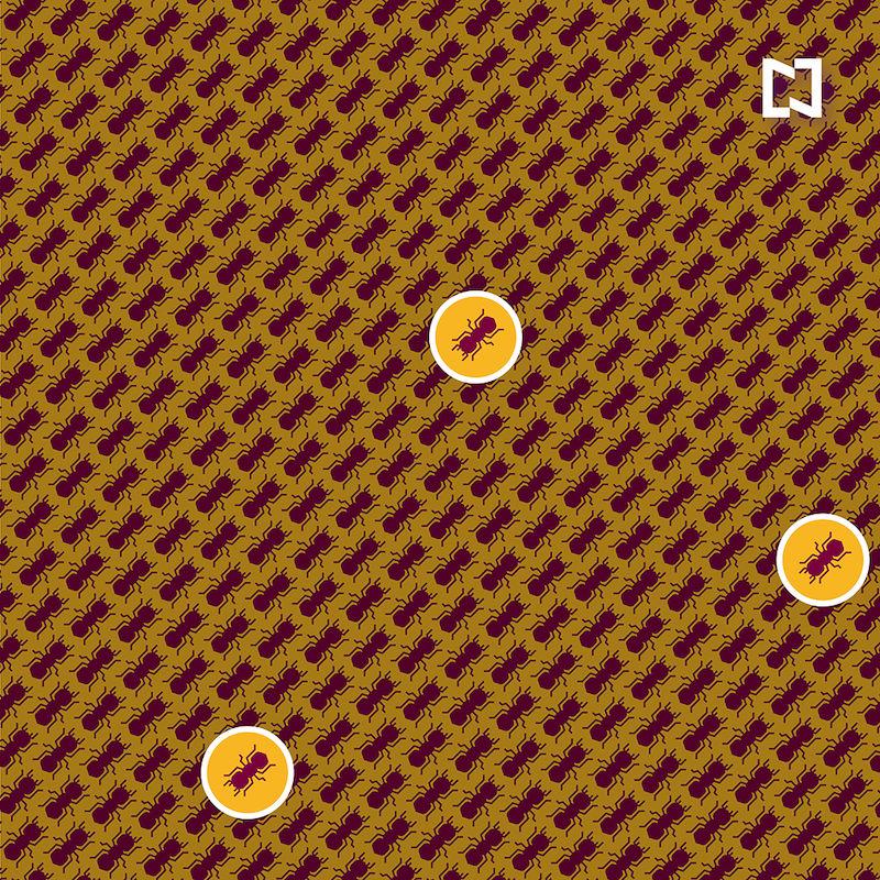 Encuentra las tres hormigas que caminan en sentido contrario, ilustración