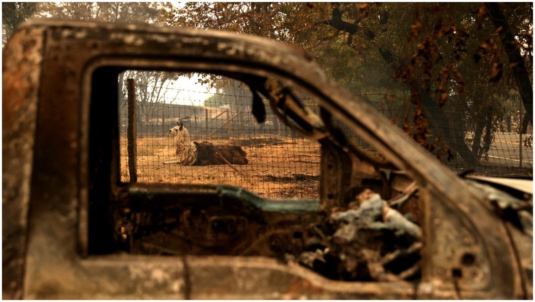 Coches quemados California