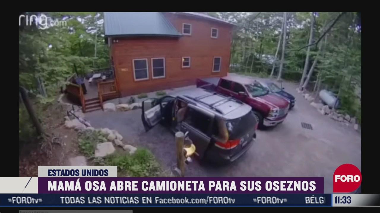 mama osa abre camioneta para sus oseznos
