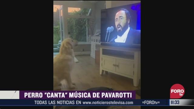 perro canta musica de pavarotti