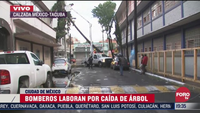 por lluvia cae arbol sobre cables y vivienda en la colonia tacuba