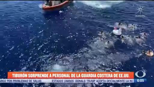 tiburon sorprende a personal de la guardia costera de estados unidos