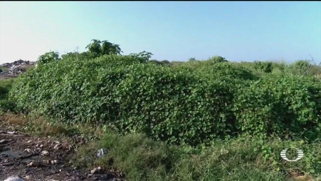 alumnos de conalep en veracruz dispersan semillas en basurero con ayuda de dron y florecen