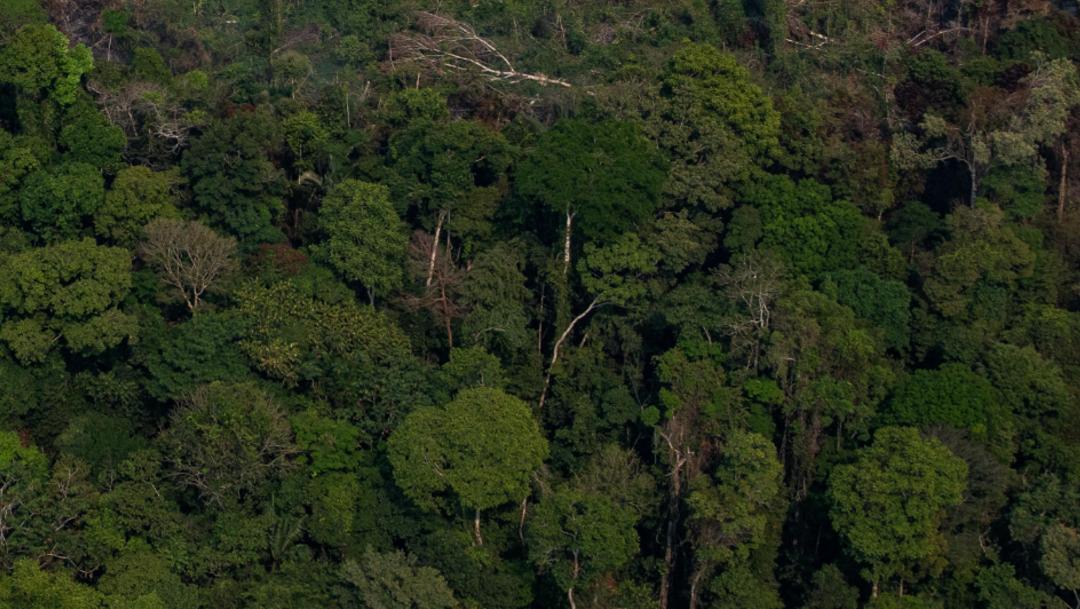 La selva brasileña sigue encarando las mismas amenazas que en 2019, pese a las acciones puntuales del Gobierno brasileño