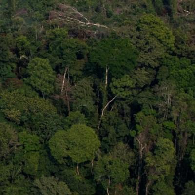 Día de la Amazonia en Brasil: El mayor bosque tropical del mundo, entre el fuego y Bolsonaro