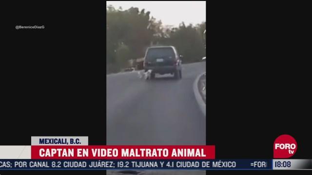 atan a perrito a una camioneta en movimiento