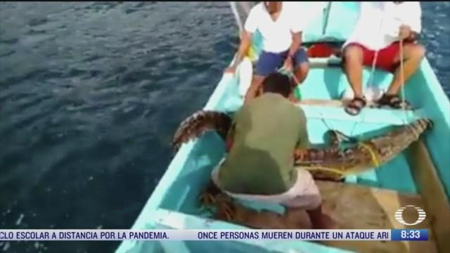 atrapan a cocodrilo en acapulco guerrero